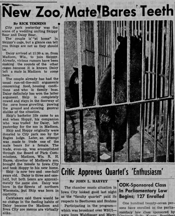 This article celebrates the arrival of a new bear to the City Park Zoo in 1947. Note the examples of anthropomorphism used throughout. (Source: The Daily Iowan, October 30, 1947)
