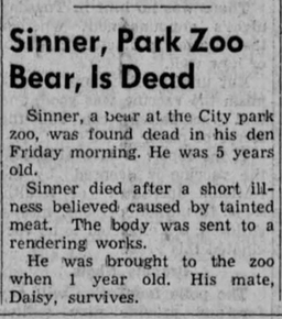 Stories such as these were commonplace in reporting about the City Park Zoo. (Source: The Daily Iowan, April 2, 1955). Bears can live upward of 30 years in the wild.